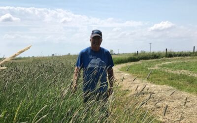 Soil Health Practices Revive Salinity Areas Regenerating Dead Zones