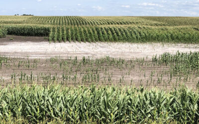 Producers have a new tool to fight saline soils expansion