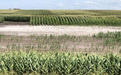 Workshop to help producers manage saline soils