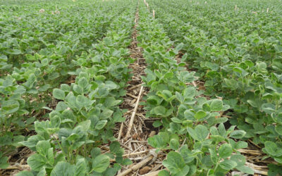 Residue helps farmers save on water, fertilizer costs