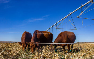 Video series offers tips on harvesting failed crops as forage